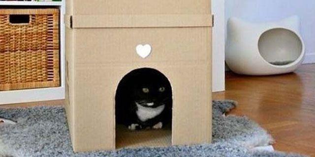 cardboard-mascota